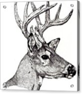 Ten Point Buck Acrylic Print