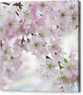 Tender Spring Pastels Acrylic Print