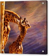 Tenderness Painted Acrylic Print