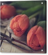 Tending The Tulips Acrylic Print