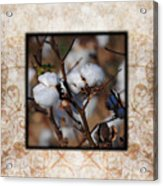 Tennessee Cotton II Photo Square Acrylic Print