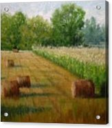 Tennessee Hay And Corn Fields Acrylic Print