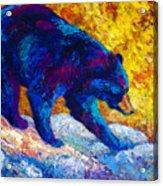 Tentative Step - Black Bear Acrylic Print