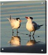 Terns On The Beach  Acrylic Print