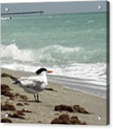 Tern's View Gp Acrylic Print