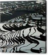 Terrace Notes Acrylic Print