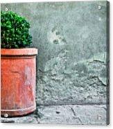 Terracotta Flower Pot On Sidewalk Acrylic Print