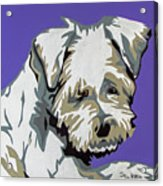 Terrier Mix Acrylic Print
