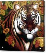 Tessas Tiger Acrylic Print