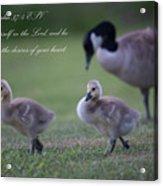 Psalm 37 Acrylic Print