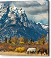 Teton Horses Acrylic Print