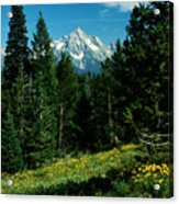 Teton Meadow Acrylic Print