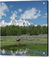 Teton Reflection With Buffalo Acrylic Print