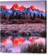Teton Reflections In The Frosted Willows Acrylic Print