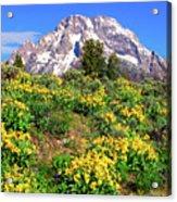 Teton Spring In The Valley Acrylic Print