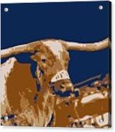 Texas Bevo Color 6 Acrylic Print by Scott Kelley