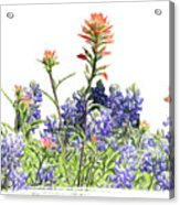 Texas Bluebonnets And Red Indian Paintbrushes Acrylic Print