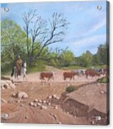 Texas Cattle Drive Acrylic Print