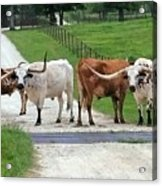 Texas Cattle Guard Acrylic Print