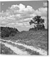 Texas Hill Country Trail Acrylic Print