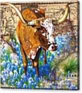 Texas Longhorn In Bluebonnets Acrylic Print