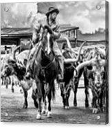 Texas Longhorns Acrylic Print
