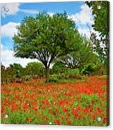 Texas Poppy Field 159 Acrylic Print