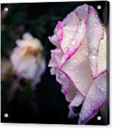 Texas Rain Drops Acrylic Print
