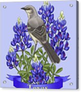 Texas State Mockingbird And Bluebonnet Flower Acrylic Print by Crista Forest