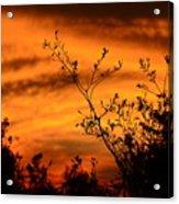 Texas Sunrise Acrylic Print