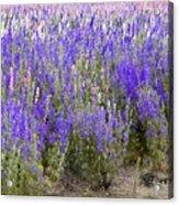 Texas Wildseed Farm Acrylic Print