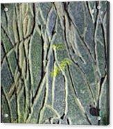 Texture Study One   Entanglement Acrylic Print