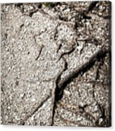 Texture With Root With Plenty Of Pebbles Acrylic Print