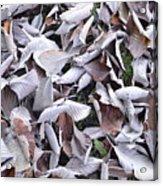 Texture103 Acrylic Print