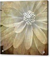 Textured Dahlia Acrylic Print