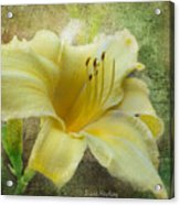 Textured Daylily Acrylic Print