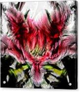 Textured Lily Acrylic Print