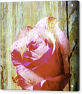 Textured Pink Red Rose Acrylic Print