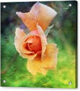 Textured Rose 3 Acrylic Print