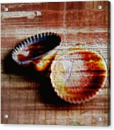 Textured Shells Acrylic Print