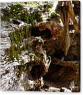 Textures On A Giant Sequoia Acrylic Print