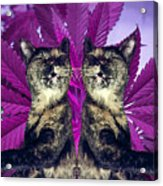 Tha 2piece Kitty Acrylic Print