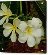 Thai Flowers II Acrylic Print