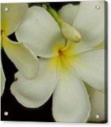 Thai Flowers IIi Acrylic Print