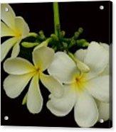 Thai Flowers Acrylic Print