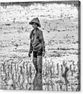 Thailand Rice Planter Acrylic Print
