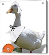 Thanksgiving Pilgrim Duck Acrylic Print
