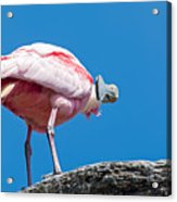 That Disapproving Look Acrylic Print