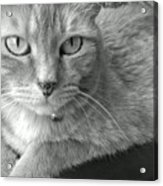 That Spotted Nose Acrylic Print