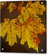 That Time Of Year Acrylic Print
